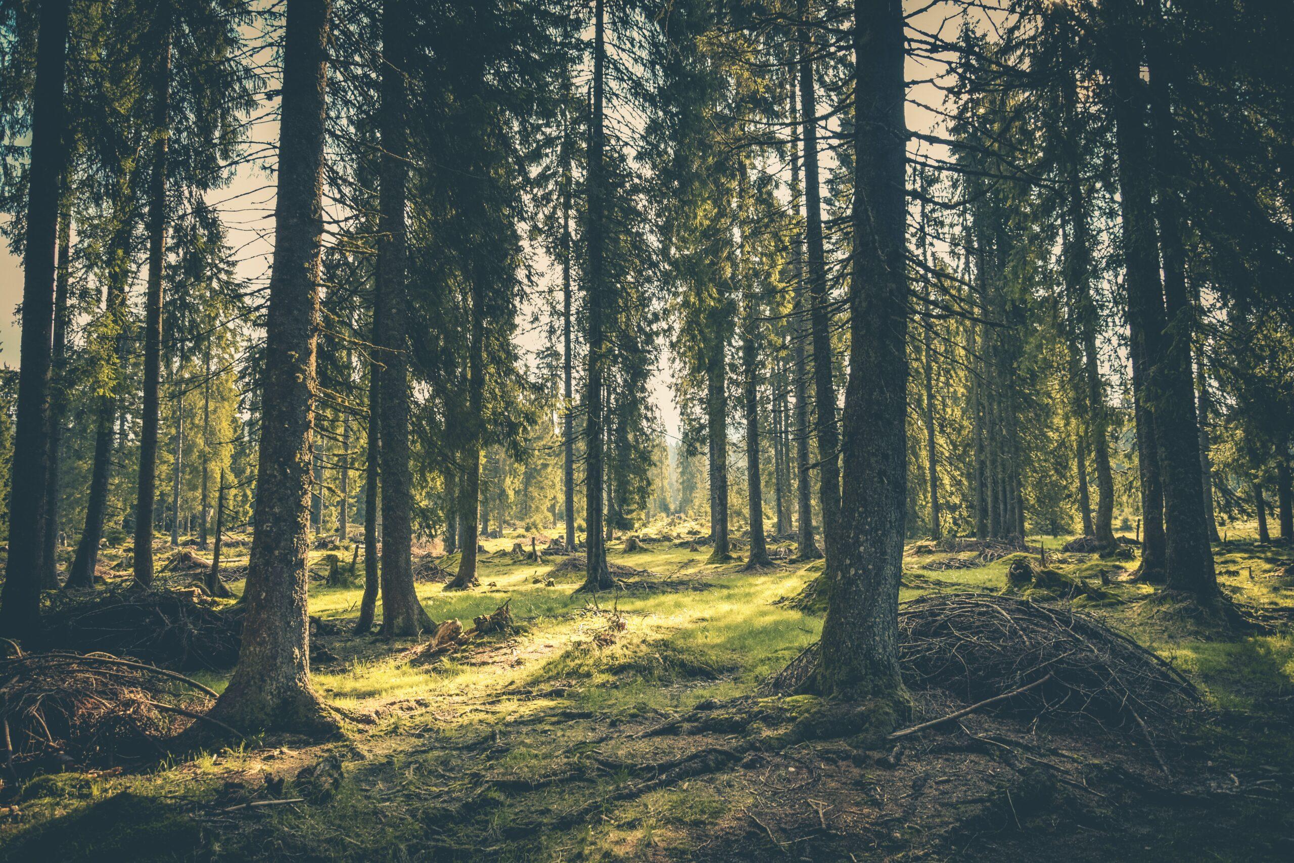 Salviamo le foreste italiane